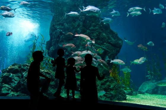 Grandi acquari d'Italia